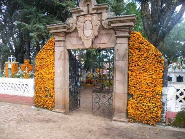 Marigolds decorating a gate