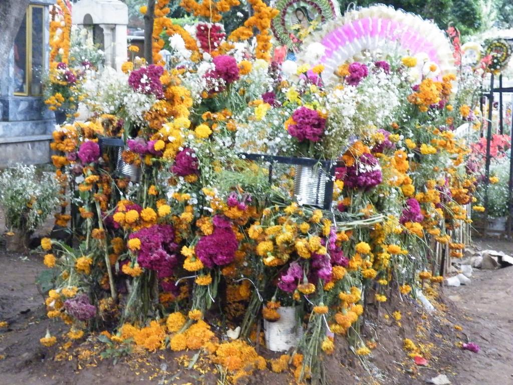 Lots of marigolds